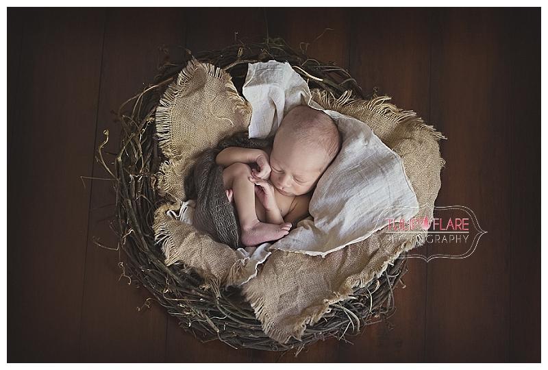 Tiny little newborn in a nest for his newborn photos in Brisbane